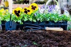 Frühlings-Gartenarbeit Stockfoto