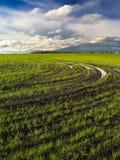 Frühlings-Getreide Stockbild