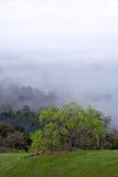Frühlings-grüner Baum im Nebel Stockfotos