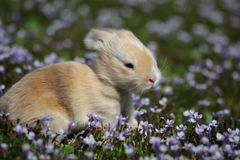 Frühlings-Häschen stockfotos