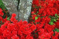 Frühlings-Hintergrund Stockbild
