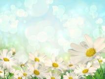 Frühlings-Hintergrund mit Gänseblümchen Stockfoto