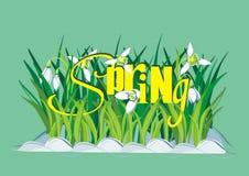 Frühlings-Hintergrund mit Snowdrops und Text Stockfotografie