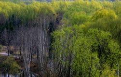 Frühlings-Holz Stockbild