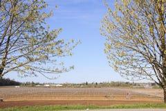 Frühlings-kanadische landwirtschaftliche Landschaft Lizenzfreie Stockbilder