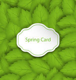 Frühlings-Karte auf nahtlosem stilvollem Muster mit grünen Blättern Stockfotos