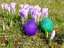 Frühlings-Krokus und Ostereier Stockbilder