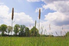 Frühlings-Landschaft Stockbild