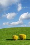 Frühlings-Landschaft Stockfotografie