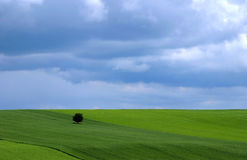 Frühlings-Landschaft Lizenzfreie Stockfotografie
