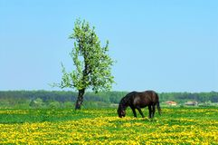 Frühlings-Landschaft Lizenzfreies Stockfoto