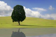 Frühlings-Landschaft in Korea mit Reflexion Lizenzfreie Stockfotos