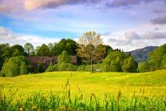 Frühlings-Landschaft mit einem Park von gelben Butterblumeen, von einzigen Baum, von leeren Bank und von Wolken im bunten Himmel lizenzfreie stockfotos