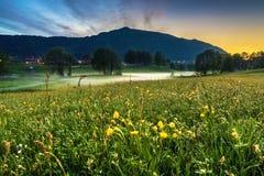 Frühlings-Landschaft mit einer Wiese von gelben Butterblumeen, von Bäumen im Nebel und von Berg in der Dämmerung lizenzfreies stockfoto