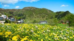 Frühlings-Landschaft mit Löwenzahn und Wiesenschaumkräutern in der Wiese lizenzfreies stockbild