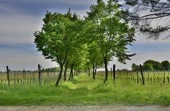 Frühlings-Landschaft nahe Cividale Del Friuli Lizenzfreies Stockfoto