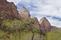 Frühlings-Landschaft Zion National Park Lizenzfreies Stockfoto