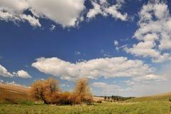 Frühlings-Landschaftszene in Colfax Lizenzfreie Stockfotos