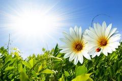 Frühlings-Laub lizenzfreie stockbilder