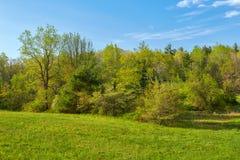 Frühlings-Laub entlang blauen Ridge Parkway nahe Roanoke, Virginia lizenzfreie stockfotografie
