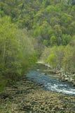 Frühlings-Laub, Tauben-Fluss, Ost-Tennessee lizenzfreie stockbilder