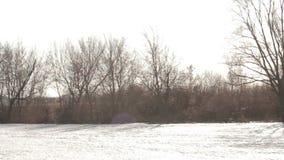 Frühlings-März-Landschaft, Panorama - bloße Bäume wachsen nahe einem gefrorenen Fluss stock video footage