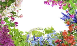 Frühlings-Mai-Blumenmischung Stockbilder