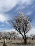 Frühlings-Natur Lizenzfreie Stockfotos