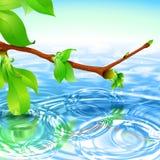 Frühlings-Niederlassungs-Wasser-Kräuselungs-Wellen-Radialstrahl-Hintergrund Stockbilder