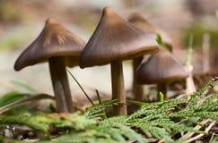 Frühlings-Pilze im Wald Stockfotos