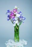 Frühlings-purpurrote Iris in einem Vase Lizenzfreie Stockfotografie
