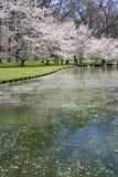 Frühlings-Reflexion Stockfoto