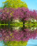Frühlings-Reflexion Stockfotografie