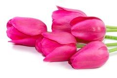 Frühlings-rosa Tulpenblumenstrauß Stockfotos