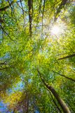 Frühlings-Sommer Sun, der durch Überdachung des hohe Baum-Holzes scheint Herauf Stockfotos