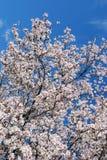 Frühlings-Stolz Lizenzfreie Stockbilder