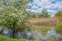 Frühlings-Sumpfgebiet Stockfotografie