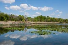 Frühlings-Sumpfgebiete Lizenzfreies Stockbild