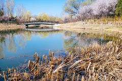 Frühlings-Szene von Peking olympischer Forest Park, China lizenzfreie stockfotografie