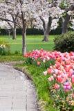 Frühlings-Tag in einem Park mit blühenden Bäumen Stockbild