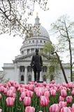 Frühlings-Tulpen am Kapitol Lizenzfreie Stockbilder