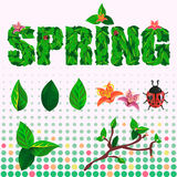 Frühlings- und Sommersatz des Textes, der Blumen, der Blätter und des Marienkäfers Lizenzfreie Stockbilder
