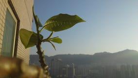 Frühlings-Wachstum Stockfotografie