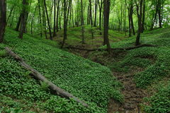 Frühlings-Wald Stockfoto