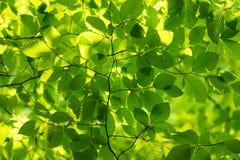 Frühlings-Wald Stockbild
