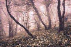 Frühlings-Wald im Nebel Schöne natürliche Landschaft Abbildung der roten Lilie Lizenzfreies Stockbild