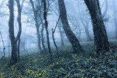 Frühlings-Wald im Nebel Schöne natürliche Landschaft Abbildung der roten Lilie Lizenzfreie Stockfotografie