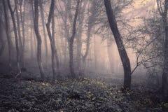 Frühlings-Wald im Nebel Schöne natürliche Landschaft Abbildung der roten Lilie Lizenzfreie Stockbilder
