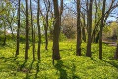 Frühlings-Waldland Lizenzfreies Stockbild