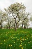Frühlings-Wiese Lizenzfreie Stockfotos